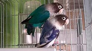 pareja-personata-azul-cielo-y-arlequin