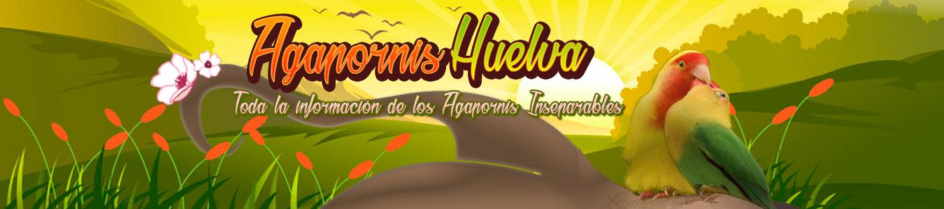 Agapornis inseparables papilleros Huelva | Aves y Pájaros