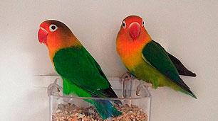 pareja-fischer-verde-ancestral
