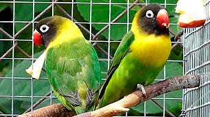pareja-personata-verde-ancestral