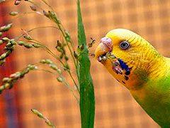 Nociones de alimentación para pájaros