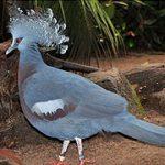 Conoce estas 5 aves exóticas