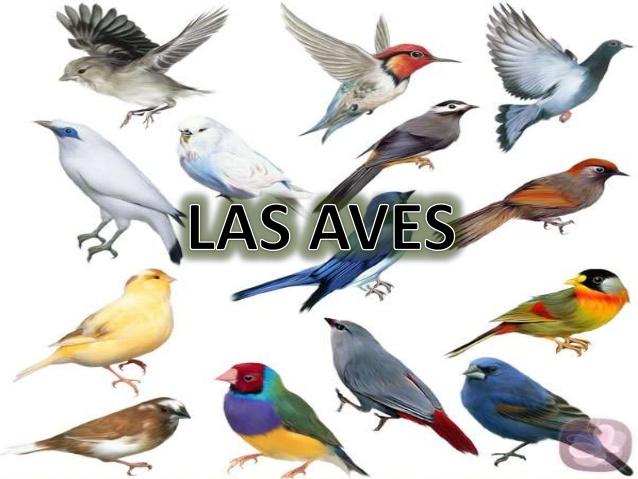 Resultado de imagen de las aves