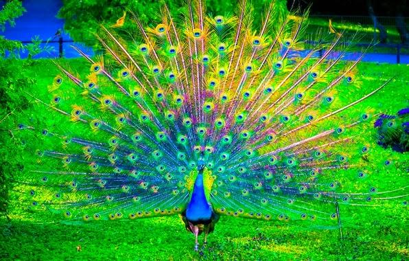 bonitas plumas ave
