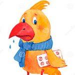 ¿Cómo saber si un pájaro está enfermo?