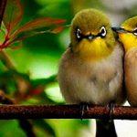 ¿Existe diferencias entre aves y pájaros?