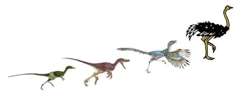 evolucion aves 2