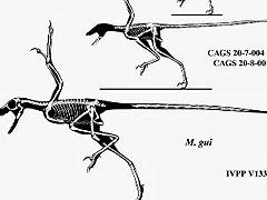 evolucion aves