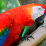 Conoce a estas 5 aves en peligro de extinción
