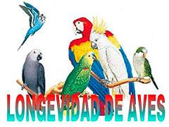 longevidad aves