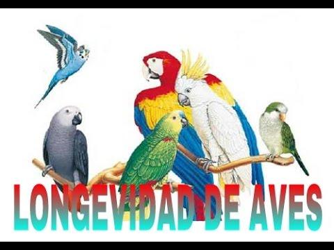 longevidad de las aves