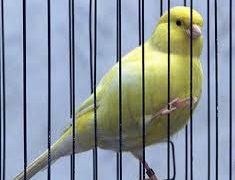 No todos los pájaros pueden vivir enjaulados