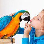 ¿Qué pájaro es el ideal para tener de mascota?
