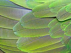 ¿Cómo mantener la buena salud del plumaje de tu ave?