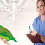 La psitacosis puede matar a tu ave sin darte cuenta