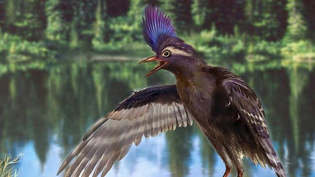 Archaeornithura meemannae