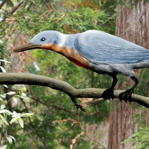 concornis-lacustris-grande