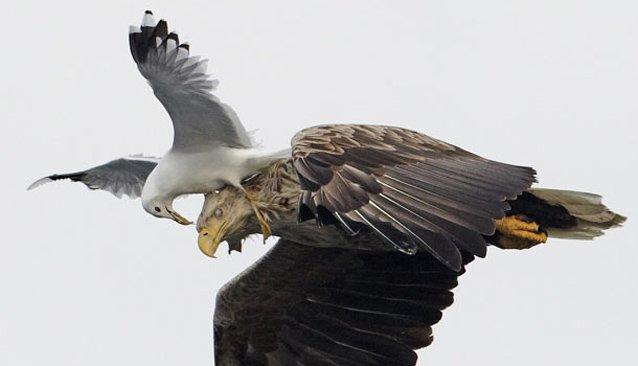 aves-que-se-vuelven-violentas