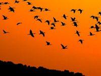 migracion-aves-porque
