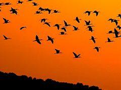 ¿Porque las aves hacen la migración?