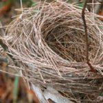 ¿Por qué las aves hacen nidos?