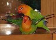 Sistema de apareamiento de las aves