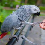Inteligencia y sentidos de las aves
