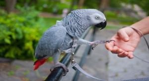 aves inteligentes