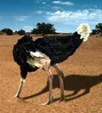 avestruces-esconden-cabeza