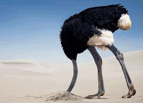 Resultado de imagen de avestruz escondiendo la cabeza por q viene un ejercito