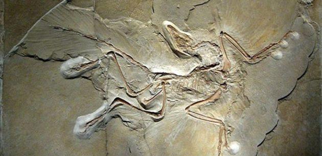 origen-de-las-aves