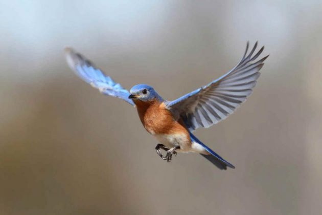 pajaro-volando
