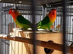 fotos de nuestro aviario