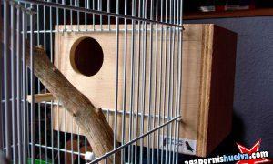 Cómo y que materiales necesitan los agapornis para hacer sus nidos
