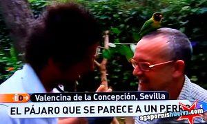 Reportaje de España Directo (TVE) sobre los agapornis